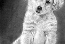 honden en katten kleurplaten
