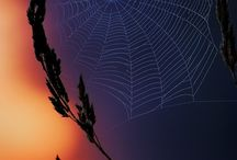 Tangled Webs are.......Weaved