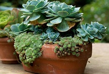 Container gardening / by Susan Day