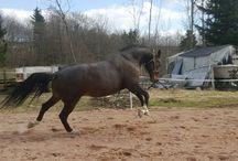 Pine Runner ,my horse my love ❤❤