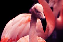 Flamingoes / Because life is always happier with a flamingo
