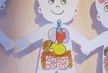 İç organlar