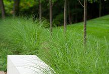 díszfüvek a kertben - ornamental grasses