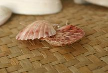 Handmade Earrings - by ShellCentric / Earrings, studs, clips, mostly around New Zealand sea shells. Handcrafted in New Zealand