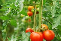 Gardening / Vegetable, flower, fairy, back-yard, container