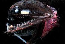 Tiefsee-Fische