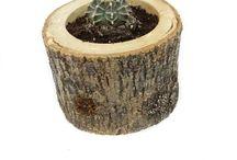 Succulent Sukulent Çesitleri / Evde, ofiste, bahçede balkonda kullanıp  yeni ev hediyesi olarak yada misafirliğe gittiğinizde götürebileceğiniz Echino Succulent-Sukulent çiçeği hem görselliği ile hemde ilginç tarasımı ile göz dolduruyor.   Sıradan saksıların yerine, gerçek odunun el ile  oyulması sonucu ortaya çıkan odun saksının içerisine, birbirinden güzel sukulentlerin konulması ile oluşan succulent aranjmanların bakımı da çok kolaydır.