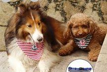 Αξεσουάρ σκύλου / Αξεσουάρ για κατοικίδια