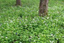 GARDEN_wild garden / natural gardens, organic garden