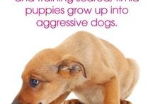 Raising Puppies! / Cute puppies!