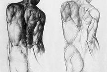 Jenő Barcsay anatomy