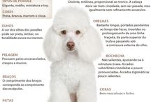 Dogs poodle