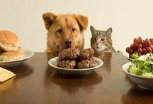 How Make Budgeting food Dog Care