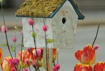 the house bird