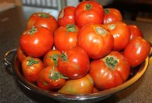Fresh From the Farm Tomatoes