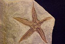 Fossils Album