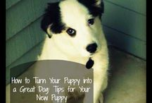Puppy Love / Anything and everything to do with your fur babies