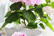 Blumen, Garten...
