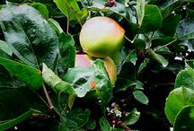 Applegarden