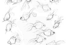 Drawing Animals: Sea Creatures