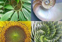 Spirals & Circles