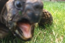 Moje želvička
