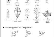 Plants ID