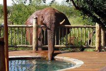 All about giraffes & elephants / by Vicki Sprague
