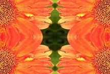 Flora Art / Floral photography work.
