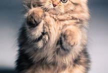 Котята и взрослые кошки / О любимых пушистиках