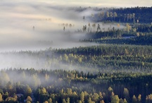 Landscape experience / The swedish forrest feeling
