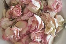 gorgeous roses / by Deanna