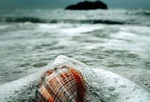 BEACH INSPIRATION, shells, starfish -serene beauty