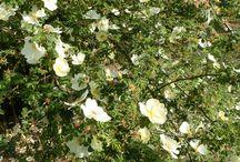 """Rose, roses / I colori delle rose nel """"roseto"""" antistante il Serrone della Villa Reale a Monza"""