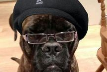 Samuel l Jackson  / by BP's Pinboards