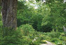 Metsäpuutarha
