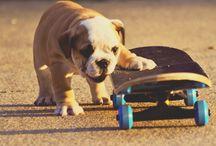 Bulldogs, I love!