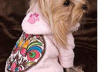 Dog Clothes / by Maltese Dog