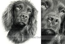Melanie Pencil Portraits / These are just a few of my commissioned pencil pet portraits. They are hand drawn portraits by myself Melanie Phillips. Please be aware that each drawing is copyrighted and must not be used or reproduced elsewhere.