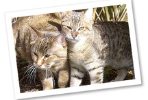 Meet the Breeds: Cats / by Red Bank Veterinary Hospital