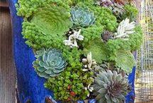 ♡ plantinhas ♡ hortinhas ♡