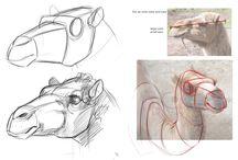 Anatomía de Animales