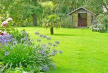 Gardening Tips / Tips for garden maintenance