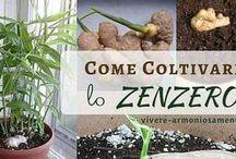 colture