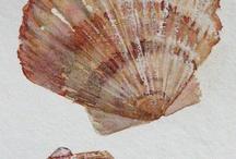 Muszle/Shell