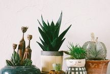 .flowerpots/vases