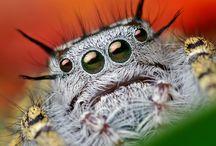 Arachnidism