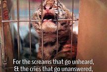 Salvarea animalelor