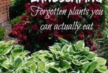 Edible landscape plants