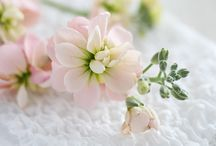 Look Flower